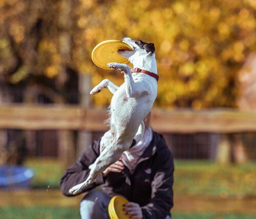 animal-2586116_640-frisbee